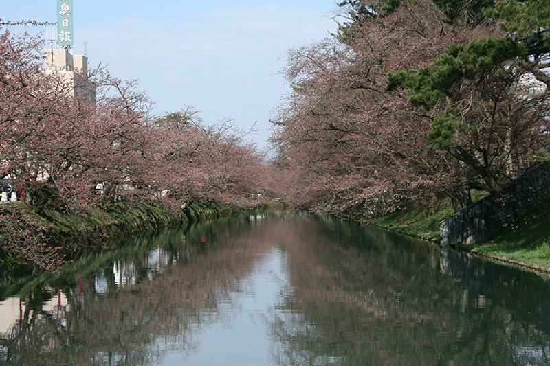 弘前公園(弘前城)・外濠の花筏 今の様子