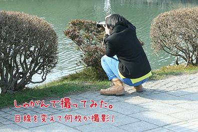 弘前公園(弘前城)・外濠の花筏スポット詳細2