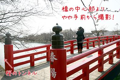 弘前公園(弘前城)西濠とボート スポット詳細2