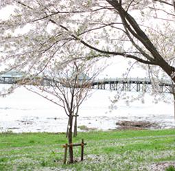 世界一の木造橋 鶴の舞橋