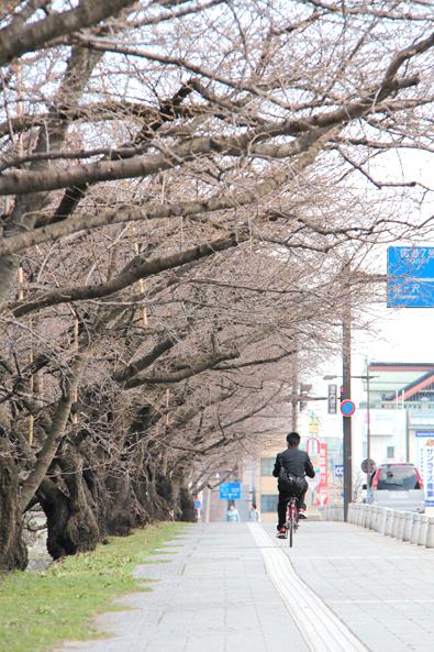 弘前公園・弘前城 露店(出店)のが着々と進んでいるようです(2014年4月7日)