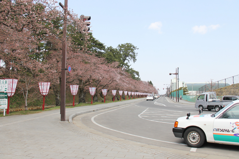 外堀(東門付近)弘前さくらまつりまで残すところ1日。開花宣言が発表されました!