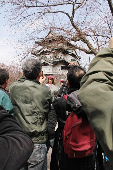 本日開幕した弘前さくらまつり2014 大人気のミス桜