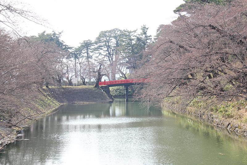 杉の大橋と桜の今の様子