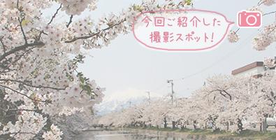 外濠と岩木山と桜