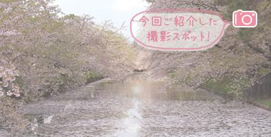 外濠の花筏 桜のじゅうたん