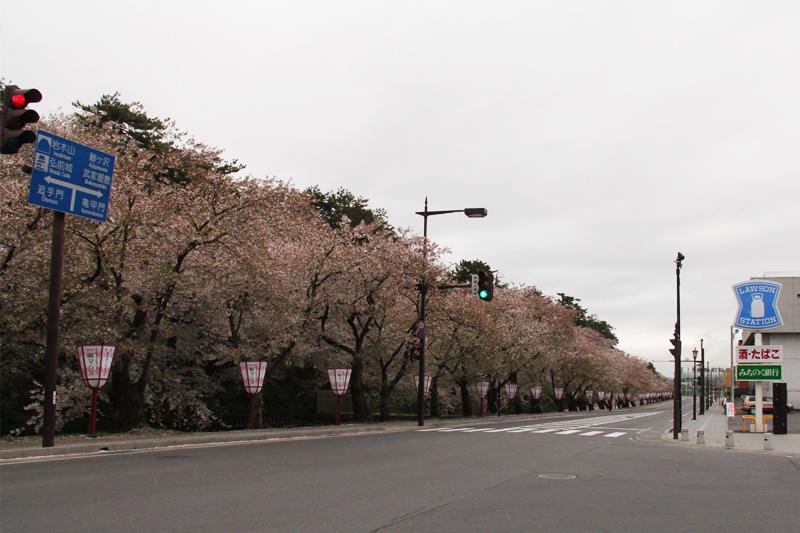外堀の桜は多くの桜が散っています