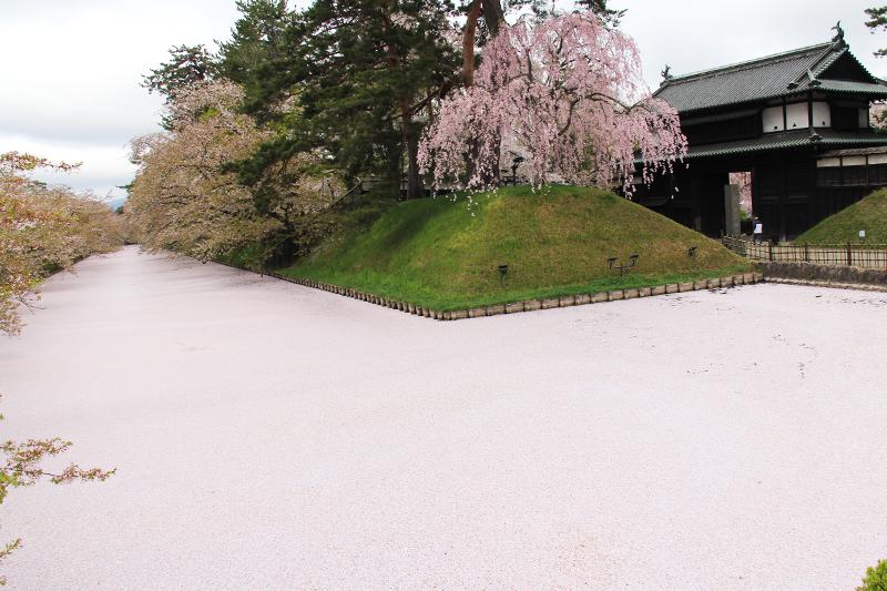 追手門と桜の絨毯(じゅうたん)・花筏(はないかだ)