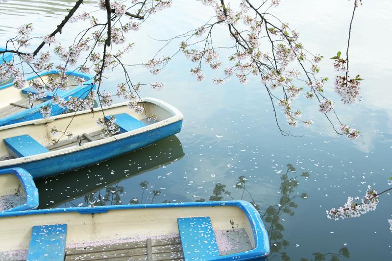 西堀のボートの中にも散った桜の花びらがたくさ