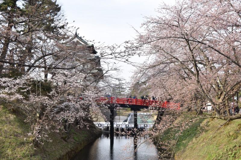 弘前城と桜の様子