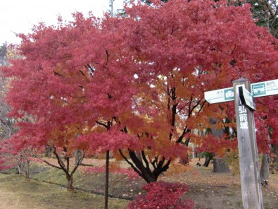 弘前公園 紅葉