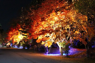 弘前公園 紅葉ライトアップ