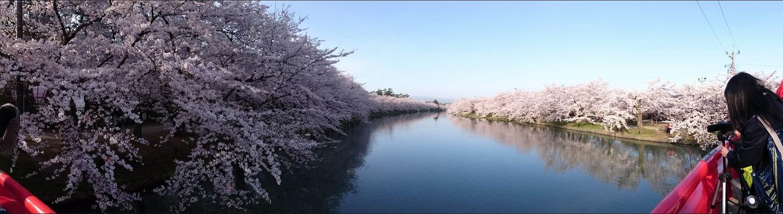 弘前公園・西濠(2016年4月24日6:30頃)