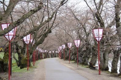2016年4月15日の弘前公園の様子