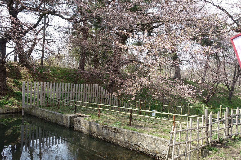 花筏(はないかだ)撮影スポット ローソン弘前公園前店付近