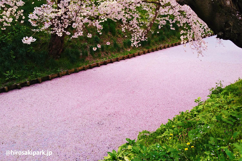 弘前公園 花筏(はないかだ)