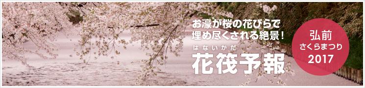 弘前公園 花筏(はないかだ)予報