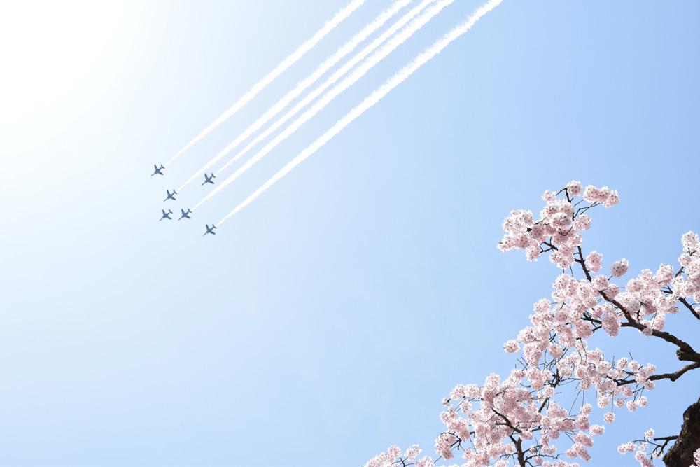 ブルーインパルスと桜
