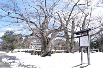 御日記蔵跡冬の様子