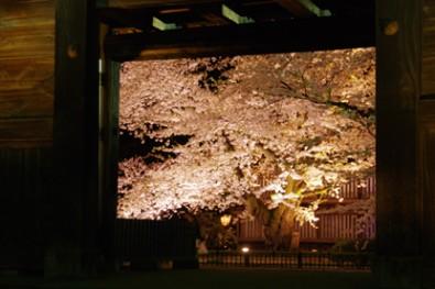弘前城のある弘前公園 日本最古のソメイヨシノ