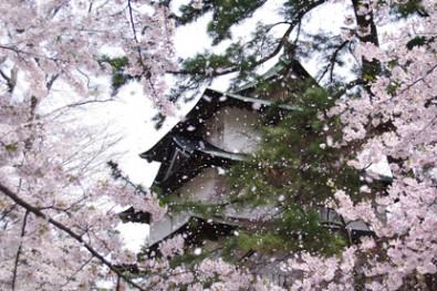 日本一の桜の名所