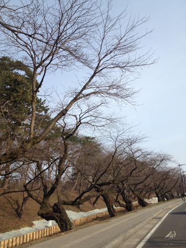 青森県弘前市の弘前公園外濠の様子