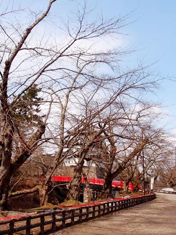弘前公園・弘前城の桜の枝 桜開花状況