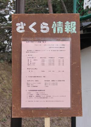 2013年4月26日付 弘前公園の桜の開花予想発表!