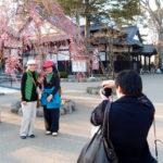 弘前さくらまつり2013_4月28日_14