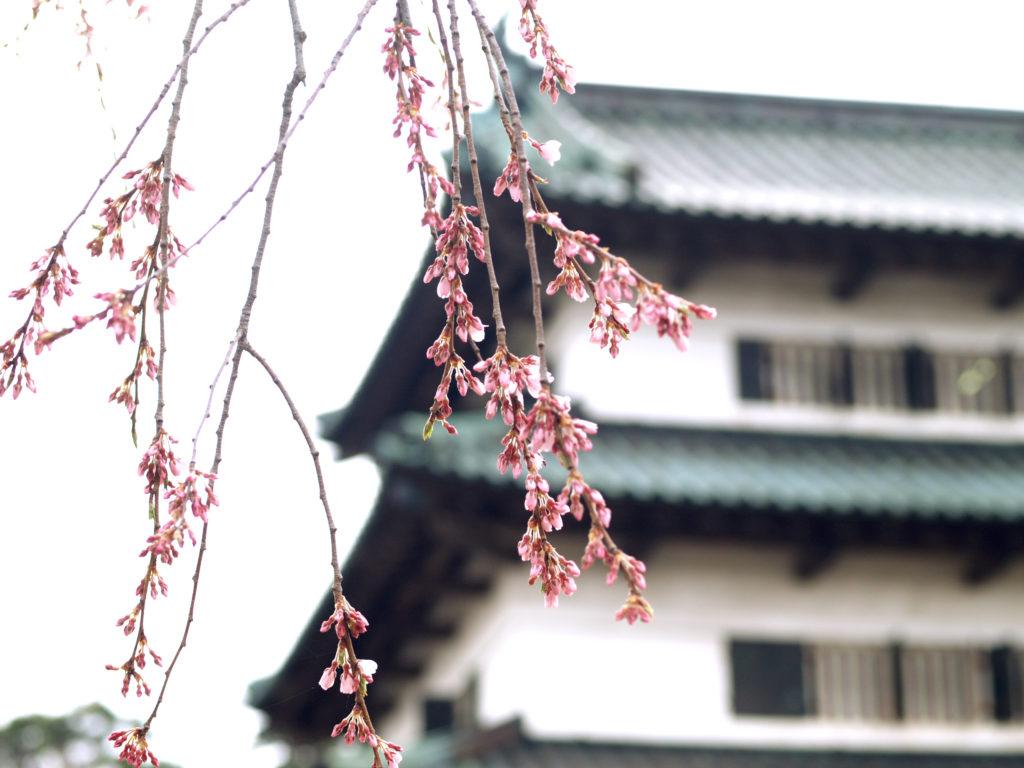 hirosakisakura_P4268644