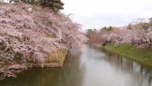 2013年5月4日(土)弘前さくらまつり12日目(開花状況)