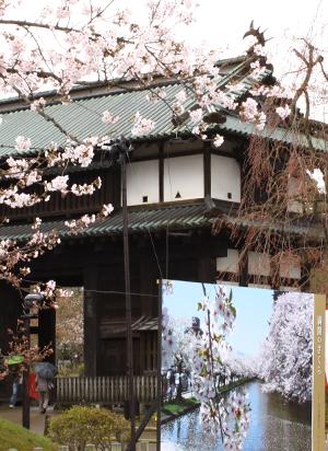 2013年5月7~8日も「準まつり体制」で弘前の桜が楽しめる