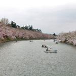 弘前さくらまつり14日目の様子(開花状況)2013年5月6日(月)