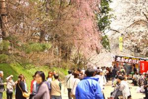 弘前さくらまつりの桜