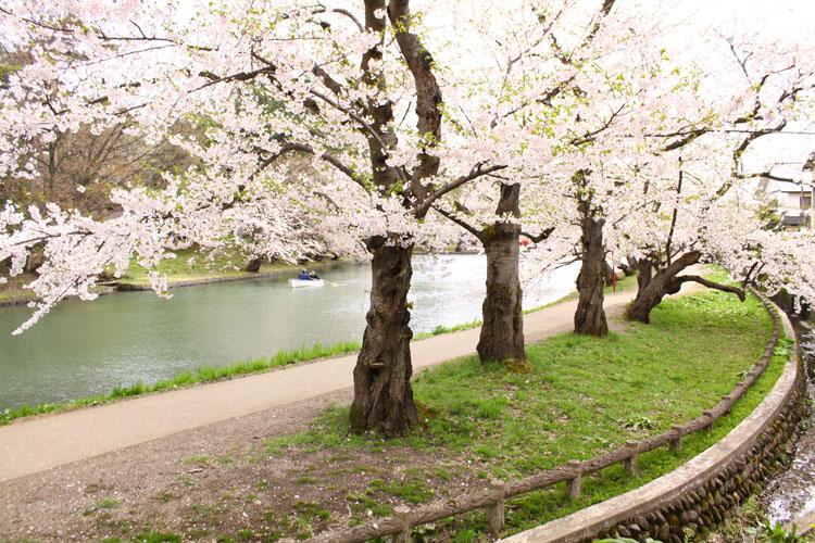 弘前さくらまつり 弘前公園(弘前城)
