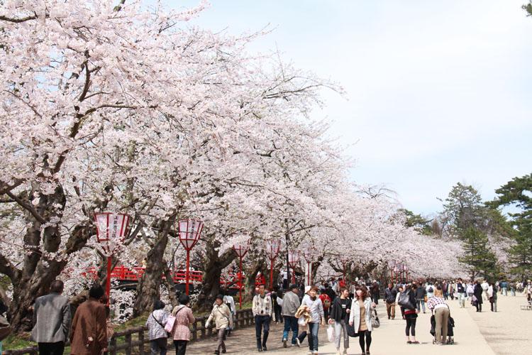 弘前公園・弘前城周辺の様子。弘前さくらまつりの一番の撮影スポットは