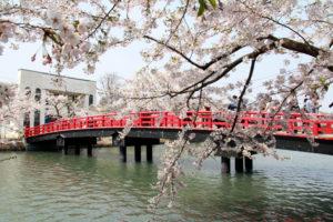 桜まつりに最もお金をかける県民は?堂々の1位はやはり青森県!