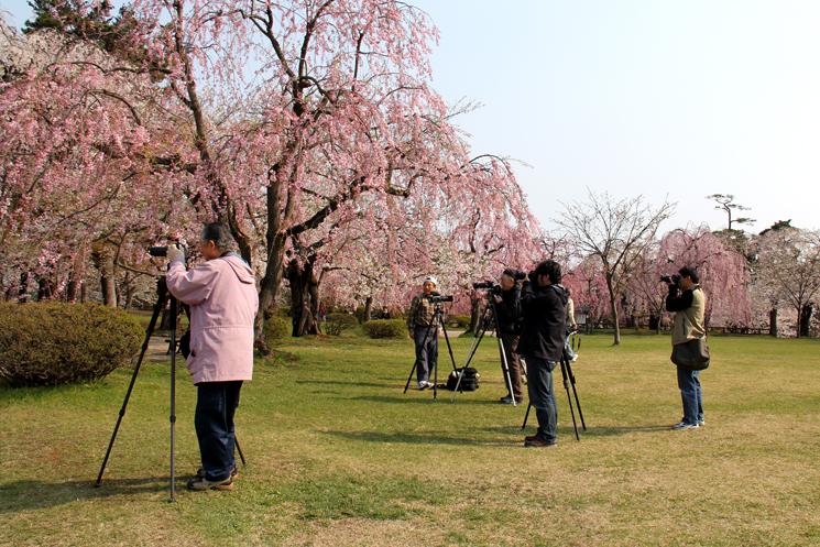 弘前公園・弘前城の桜を撮影するカメラマン