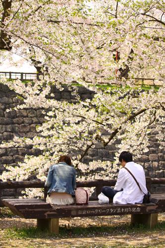 2013年5月10日二の丸の桜