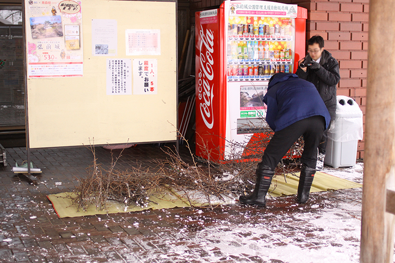 弘前公園の桜の剪定枝無料配布