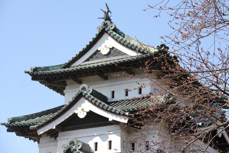 桜のつぼみがピンク色です。弘前城の様子 2014/4/19