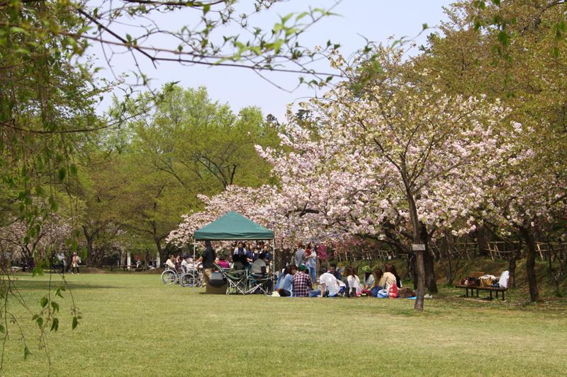 ピクニック広場の「東錦」と「普賢象」