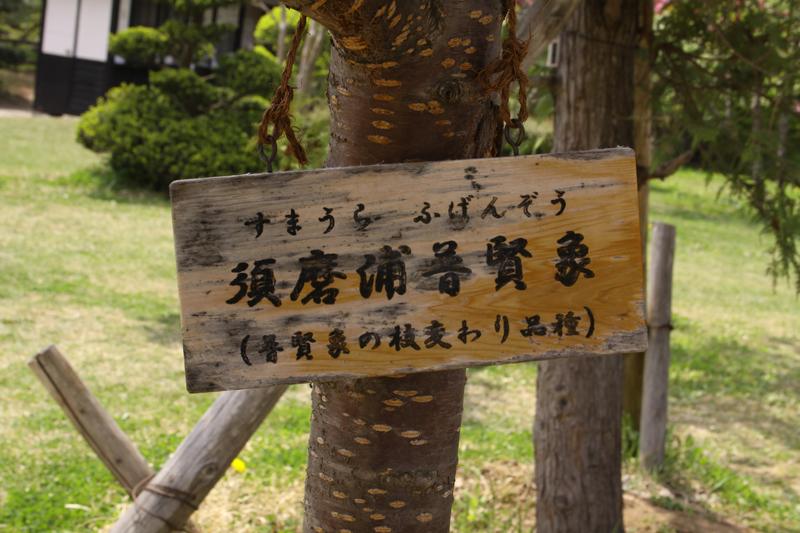 北の郭の「須磨浦普賢象(すまうらふげんぞう)」