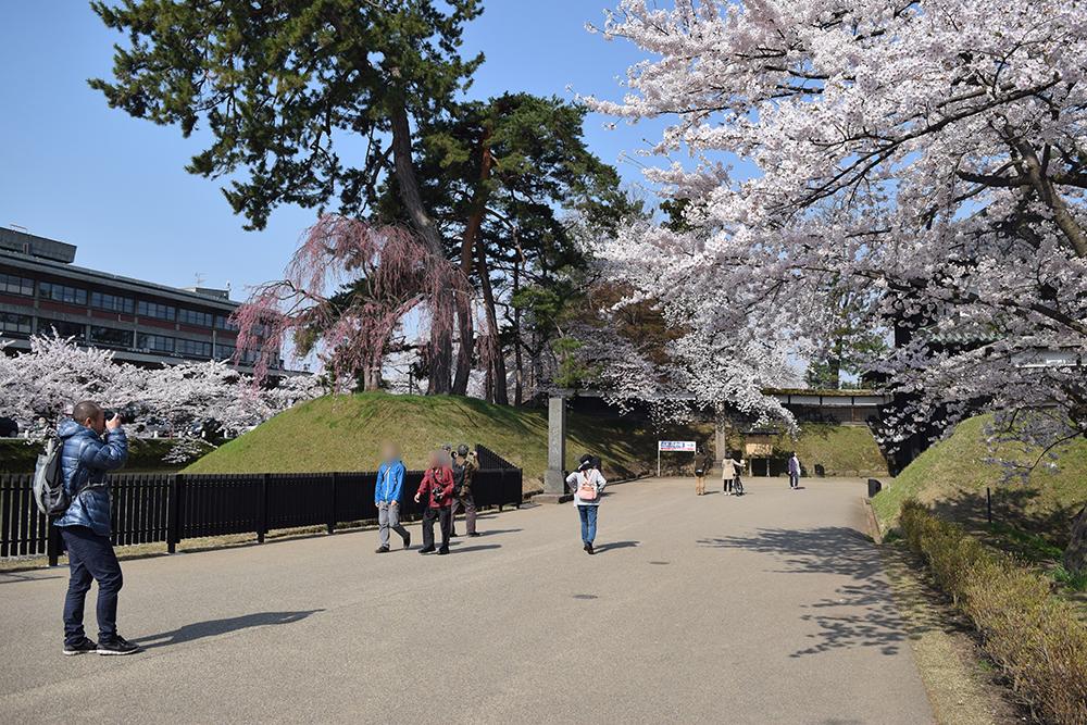 弘前さくらまつり 2015年4月23日 弘前公園・弘前城の様子