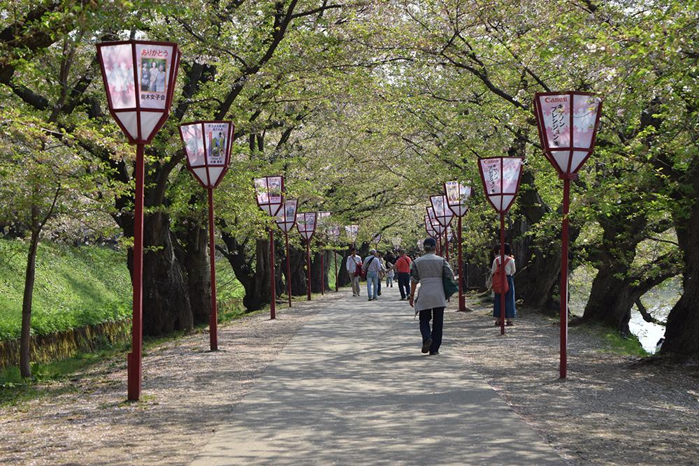 弘前桜まつり 桜のトンネル