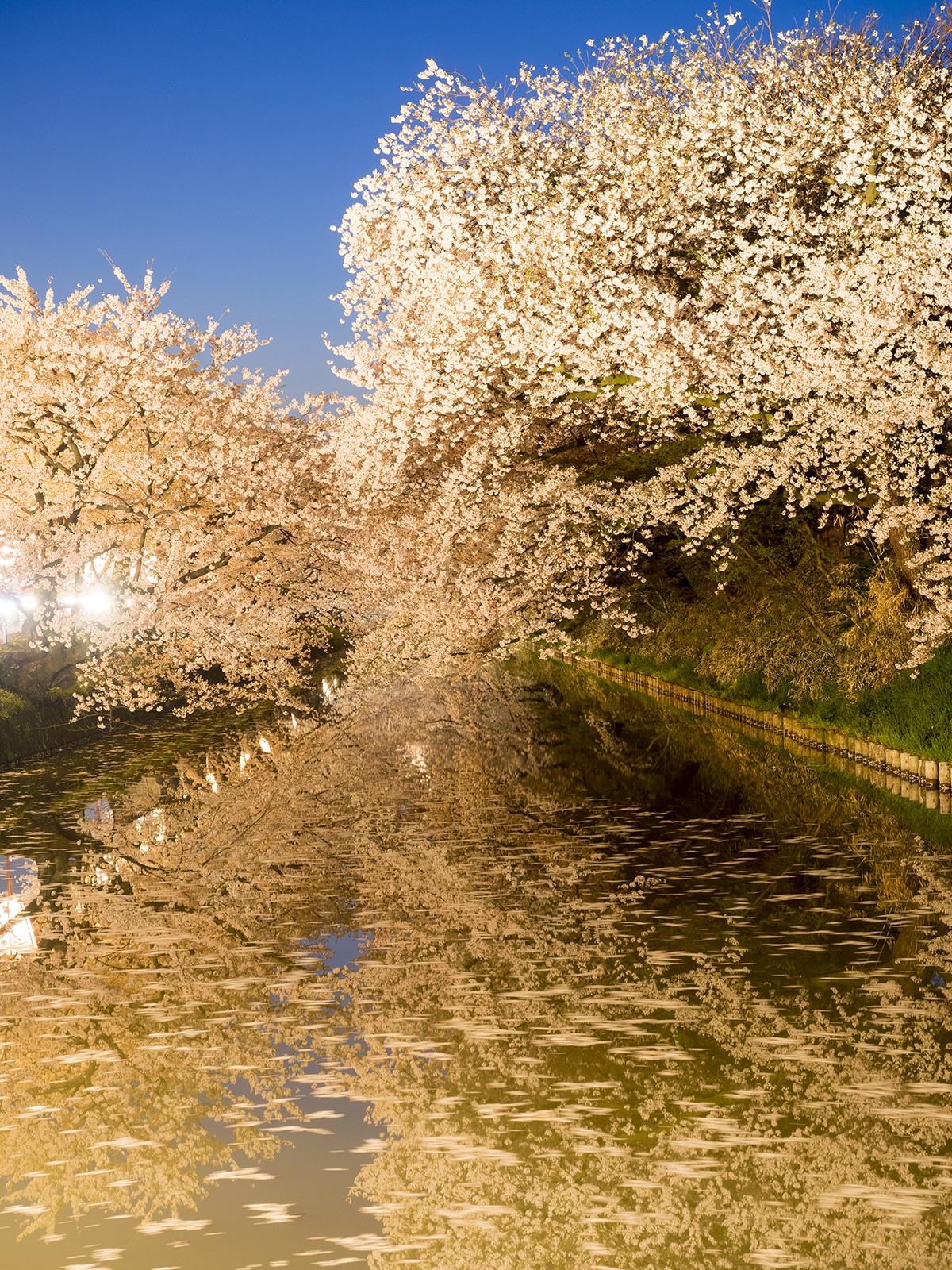 2015/4/23 21時頃 弘前公園・弘前城の様子