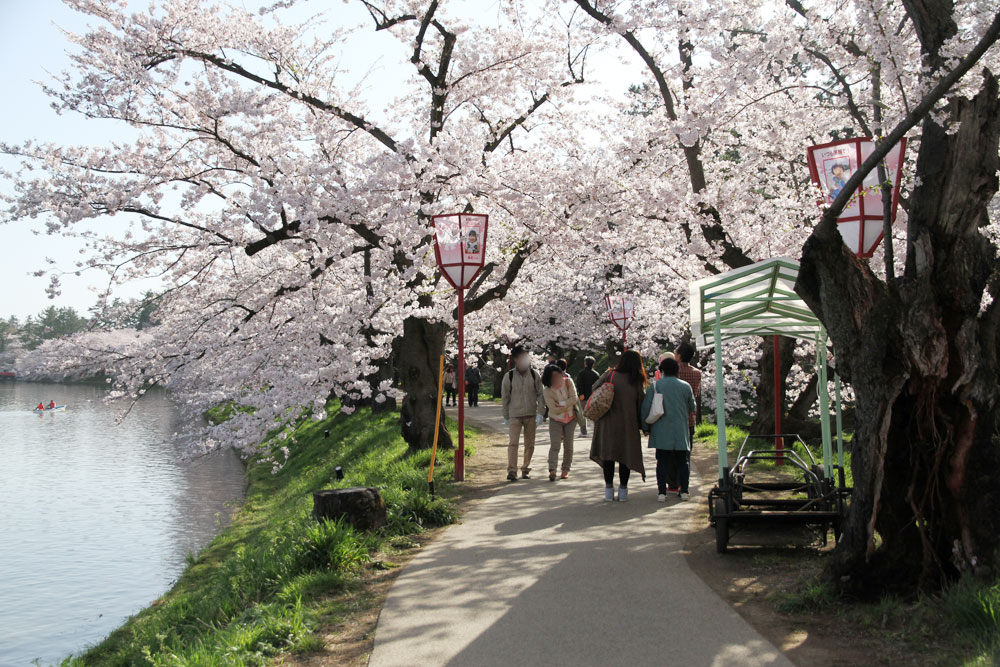 2016年4月24日 桜のトンネル
