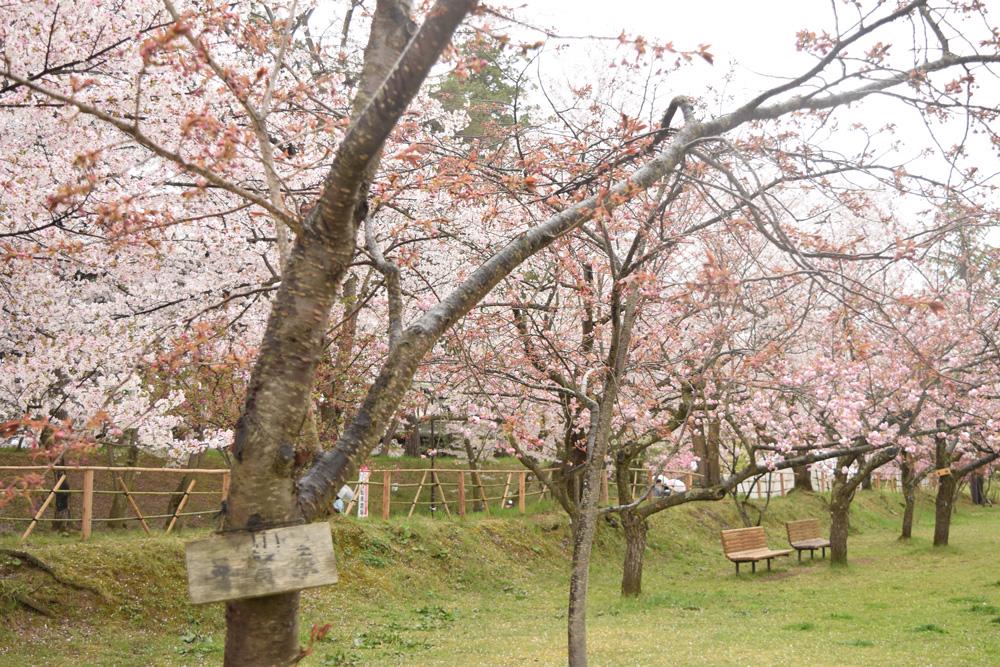 弘前公園 普賢象