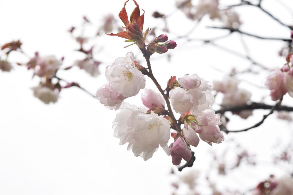 弘前公園 弘前雪明かり