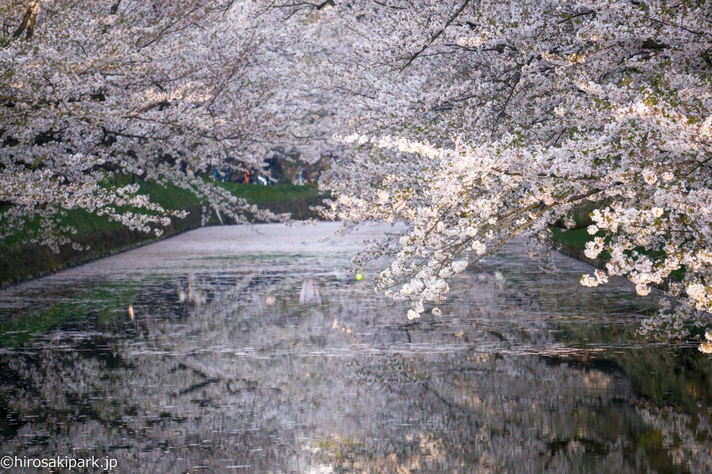 弘前公園の桜 ハート